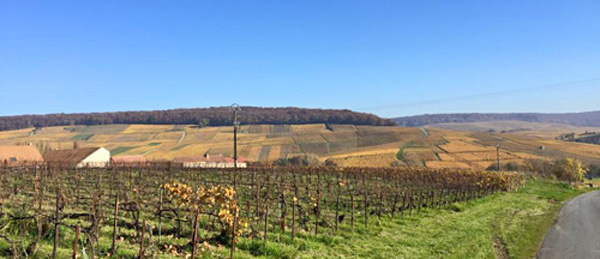 vigne-automne.2