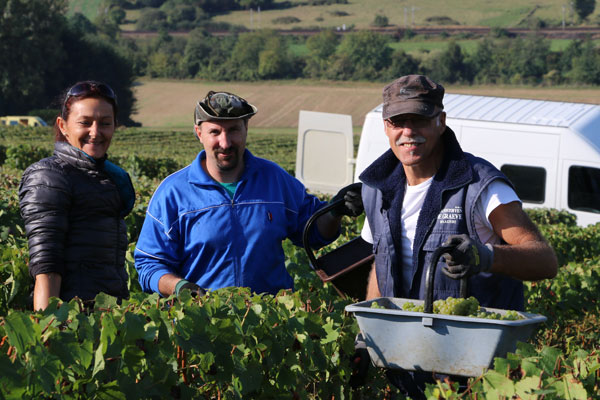 champagne casters vendanges damery